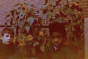 1970's Sunflowers 2 copy