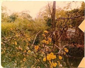 1980's Isham Park 2